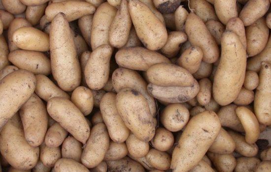 The humble potato - Photo courtesy of Graibeard