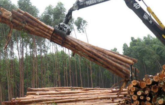 A logging operation - image courtesy of Campaign to STOP GE Trees