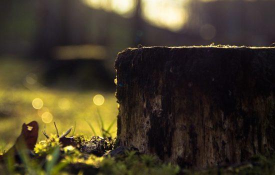 Campaña busca fomentar el consumo de madera legal en México - Imagen cortesía de Pixabay