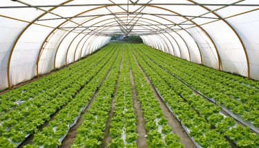 Indoor farming or controlled-environment agriculture (CEA) requires a great deal of attention to maintain the health of the plants - image courtesy of Adobe