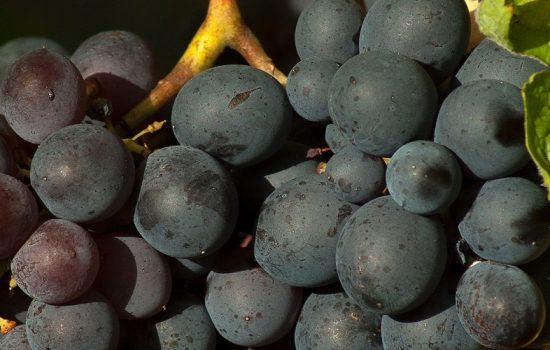 En Bolivia está parcialmente prohibido importar uva - Imagen cortesía de Pixabay