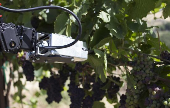 The remote operated vineyard robot keeps a human operator in the loop via a virtual reality (VR) interface – image courtesy of Digital Harvest.