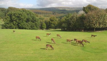 Visitors are welcomed with a panoramic view across the 45-acre site and its open border with the Dartmoor National Park – image courtesy of Wrigley UK.