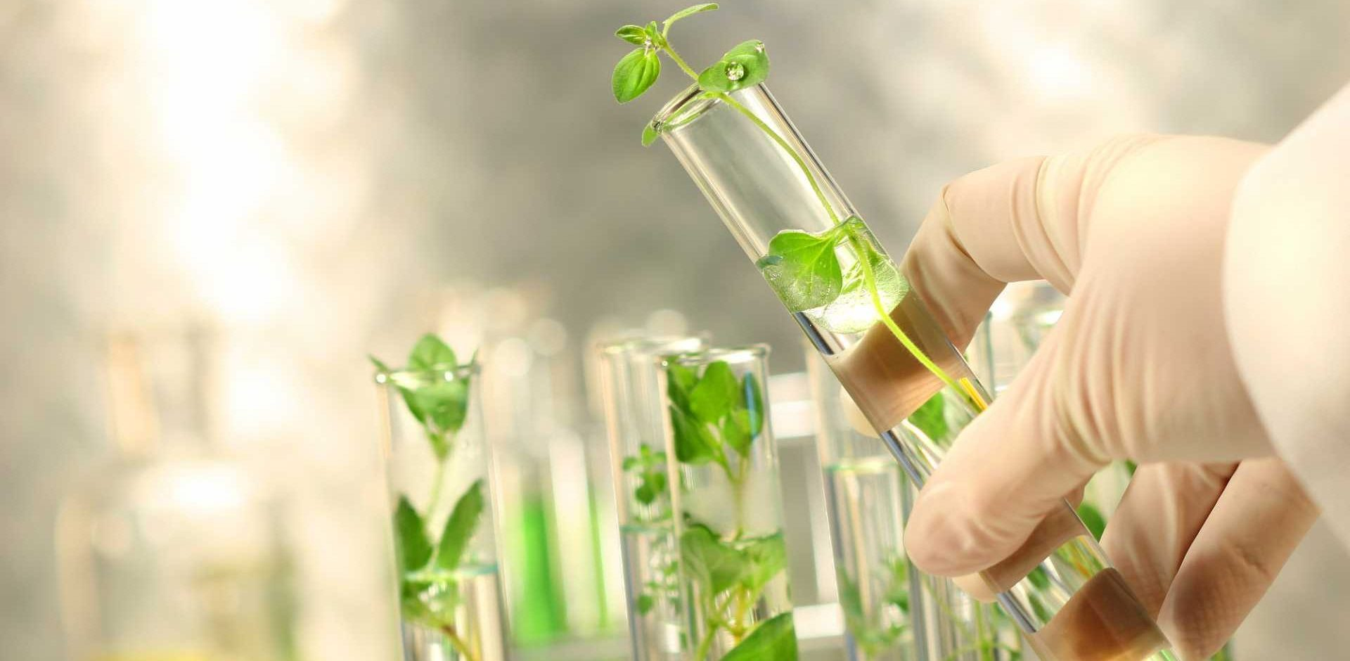 The UKBioChem10 report identifies the ten leading bio-based chemicals where the UK has the opportunity to take the global lead - image courtesy of Depositphotos.