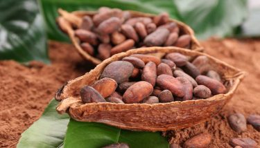 The cocoa bean is found inside the cocoa pod.