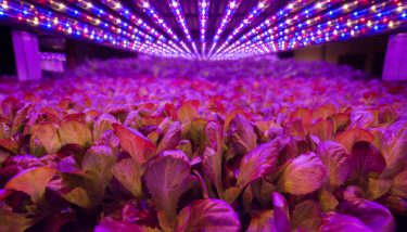 Vertical Farming - AeroFarms is a pioneer of aeroponic farming with an ambition to set up vertical farms in towns and cities across the world - image courtesy of AeroFarms.