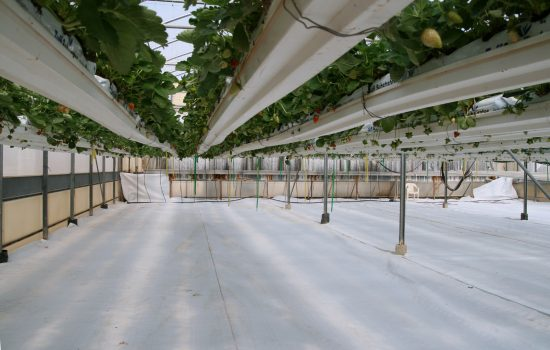 Hydroponics set up - image courtesy of WikiCommons and Remi Jouan